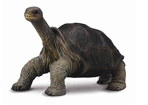 CollectA Wildlife Pinta Island Galapagos Tortoise (Lonesome George) Toy Figure - Authentic Hand Painted Model