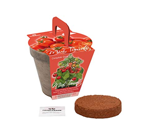 TotalGreen Holland Special Mini Tomato Grow Kit | Grow Fresh Mini Tomato Seeds Indoors | Great Gift Item | Grow Your Own Mini Tomato Plants in Unique Basalt Pot | Exclusive Kit by TotalGreen Holland by TotalGreen Holland (Image #1)
