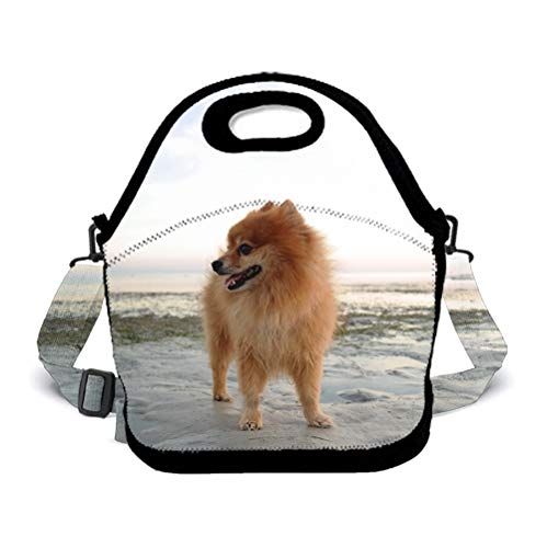 Neoprene Lunch Bag Reusable Insulated Thermal Lunch Tote Waterproof Outdoor Picnic Carry Case Lunchbox - Pomeranian On The Beach Handbags With Zipper For Womens Boys Girls