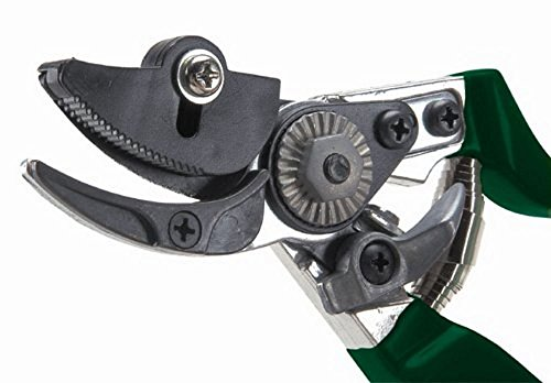 Rhs Rose - Burgon & Ball GTO/CHP RHS Rose Pruner