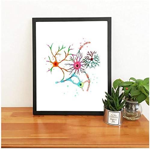 qiaoaoa Cervello Neurone Stampa ad Acquerello Cellule cerebrali Poster Nervi Anatomia Neurologia Arte Tela Pittura Neurone Sinapsi Clinica Decorazione della parete-30x40cm-Senza Cornice