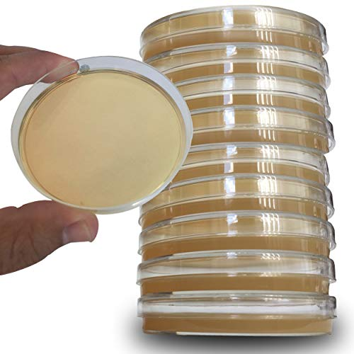 Potato Dextrose Agar Plates - Evviva Sciences - Sterile Prepoured Potato Dextrose Agar PDA Petri Dishes - Excellent Media for Growing Molds & Fungus - Great for Mushrooms and Science Fair Projects
