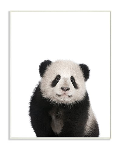 Stupell Home Décor Baby Panda Studio Photo Wall Plaque Art, 10 x 0.5 x 15, Proudly Made in USA