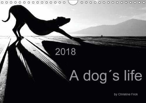 Download A Dog's Life / UK Version 2018: On Tour (Calvendo Places) pdf epub
