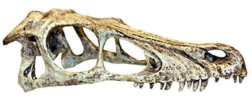 [해외]파충류 Vivarium 장식 맹금류 해골 작은 테라리움 탱크 도마뱀 뱀 거미 전갈/Reptile Vivarium Decorative Raptor Skull small terrarium tank lizard snake spider scorpion