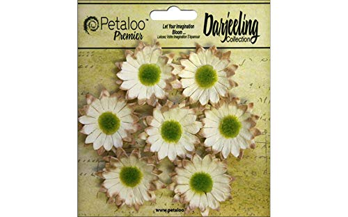 (Petaloo Darjeeling Daisy Mini Cream)
