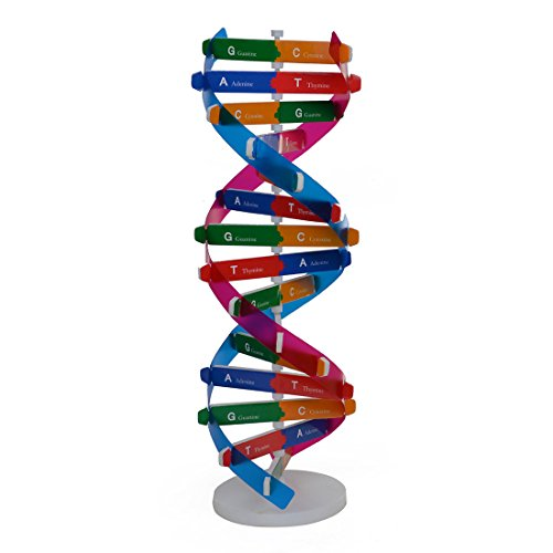 HMANE DNA Models Double Helix Model Components Science Educational Teaching Instrument ()