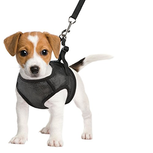 Comfy Control Leash Black Small