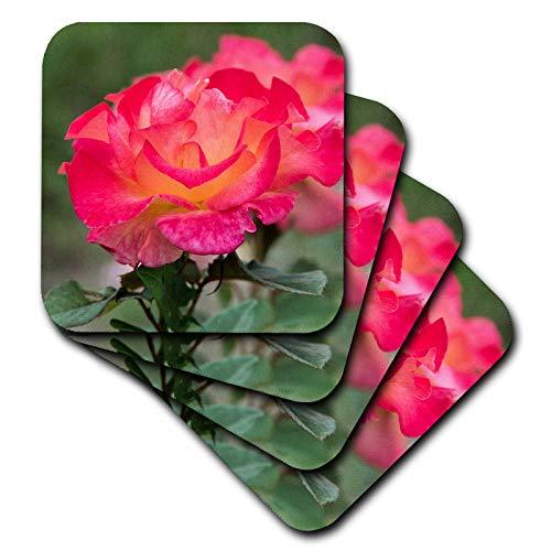 3dRose Danita Delimont - Flowers - New York, Colorful rose. - set of 4 Ceramic Tile Coasters (cst_314950_3)