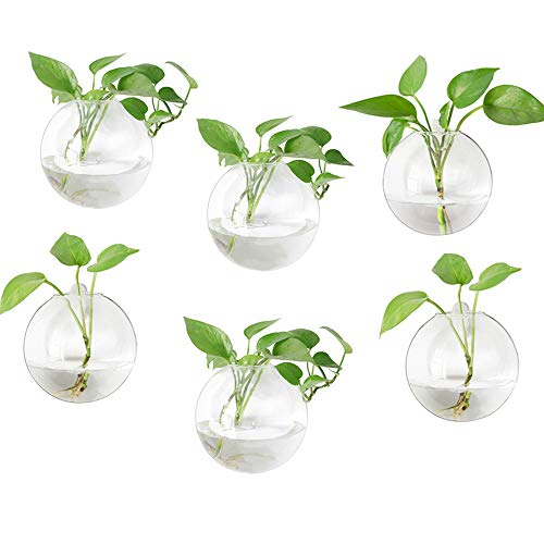 Mkono 6 Pack Glass Wall Hanging Planter Globe Air Plants Terrariums