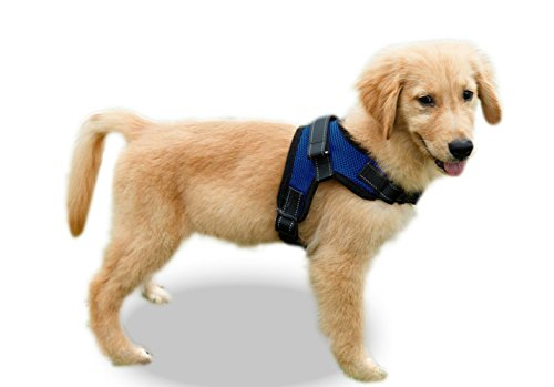 Copatchy No Pull Adjustable Reflective Dog Harness with Handle (Small, Blue) ()