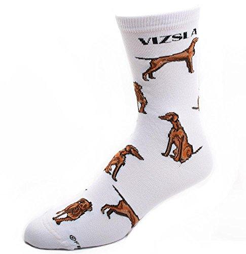 Vizsla Socks Poses 2