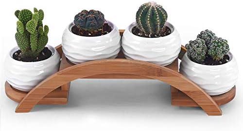 Ceramic Textured Succulent Cactus Bamboo product image