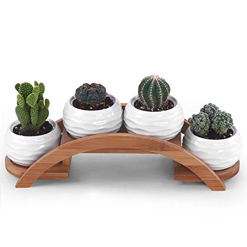 One Goods Ceramic White Mini Textured Succulent Plant Pot/Cactus Plant Pot with Bamboo Arched Tray ()