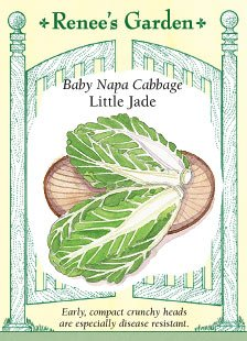 Napa Cabbage (Baby Napa Cabbage Little Jade Seeds)