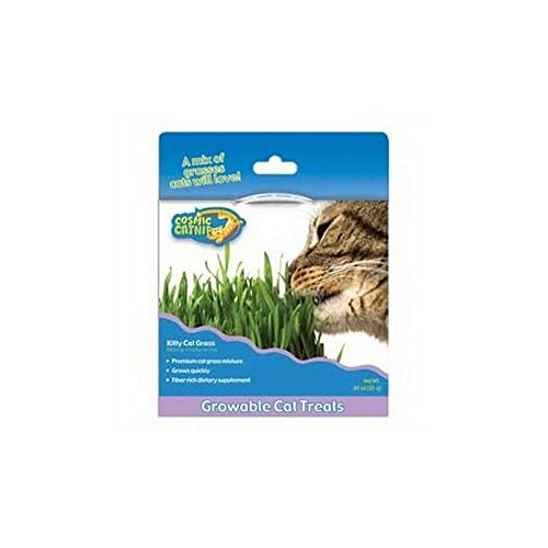 Cosmic Kitty Cat Grass (Pack of 4)