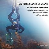 Ocean Shell Studios. Natural Abalone Shell