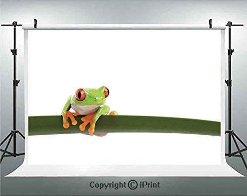Animal Decor Photography Backdrops Red Eyed Tree Frog Perches on a Long Slim Leaf Tropic Rainforest Animal Wild Life Photo,Birthday Party Background Customized Microfiber Photo Studio Props,8x8ft,Gree