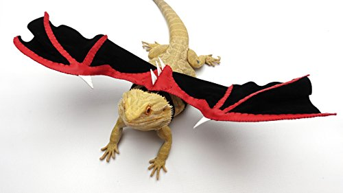 a398f3bddb56b6 Bearded Dragon Wings, Red and Black - Buy Online in Qatar. | Pet ...