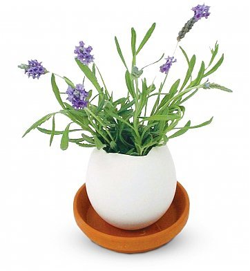 GiftTree Lavender Eggling | Grow Your own Lavender Plant Kit - Includes Pre-Planted Lavender Seeds, 3'' Ceramic Egg Pot and Terra Cotta Tray by GiftTree
