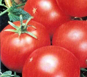 Abe Lincoln Heirloom Tomato Seeds 2020 Seeds       $1.69 Max Shipping//order 50