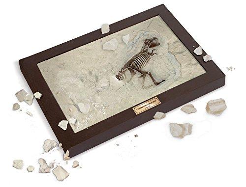 Uncle Milton Dr. Steve Hunters - Paleo Lab Excavation T. Rex Dig - Scientific Educational Toy (Milton Toys)