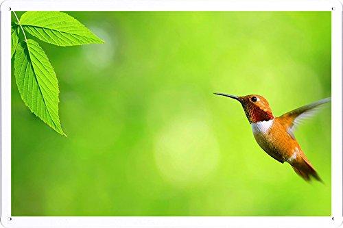 Tin Poster Sign - Hummingbird Bird Fly Swing 64983 Produced by Petpetpet