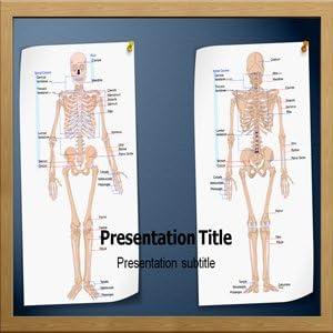 Skeletal System Anatomy Powerpoint Template Amazon Com