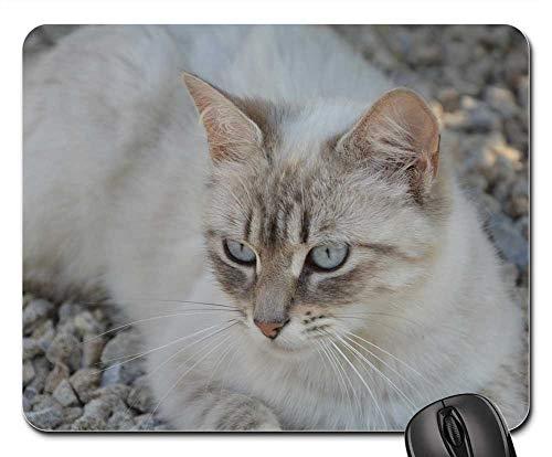 Mouse Pads - Cat Blue Eyes Head Feline