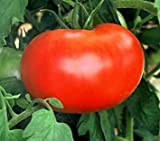 buy 55+ Big Boy Hybrid Tomato Seeds now, new 2018-2017 bestseller, review and Photo, best price $3.32