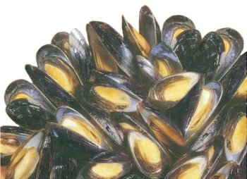 Fresh Mussels, 4 lbs.