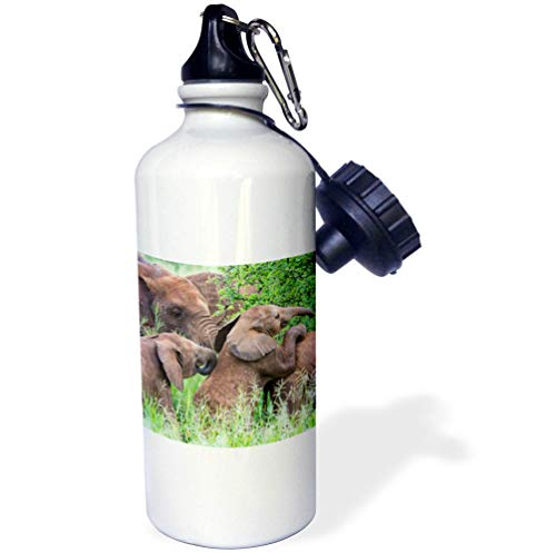 - 3dRose Danita Delimont - Elephants - Africa. Tanzania. African Elephants at Tarangire National Park. - 21 oz Sports Water Bottle (wb_312520_1)