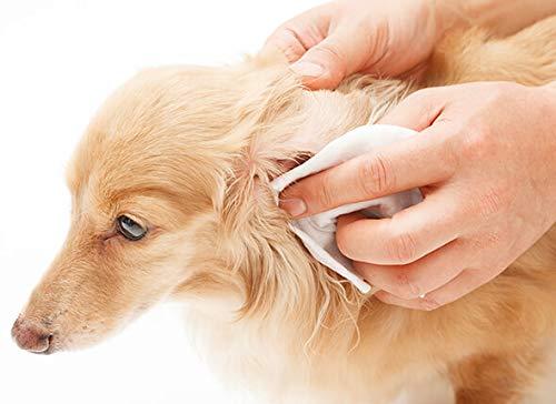 Peticare Perro Aceite de Cuidado Limpiador para Acaros del Oido y Anti-Parasitos - Gotas de Tratamiento, Limpia Eficazmente Orejas, Detiene Otitis ...