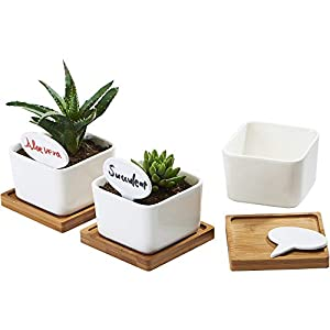 FLOWERPLUS Planter Pots Indoor, 3 Pack 3.4 Inch White Ceramic Small Square Succulent Cactus Flower Plant Pot with Bamboo Tray and Little Plants Signs for Indoors Outdoor Home Garden Kitchen Decor 12