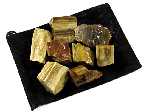 (Zentron Crystal Collection: 1/2 Pound Rough Natural Petrified Wood Stones )