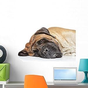 Wallmonkeys WM86423 English Mastiff Sleep Peel and Stick Wall Decals (24 in W x 16 in H), Medium 1