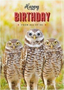 Birthday Card Happy Funny Animals Owls