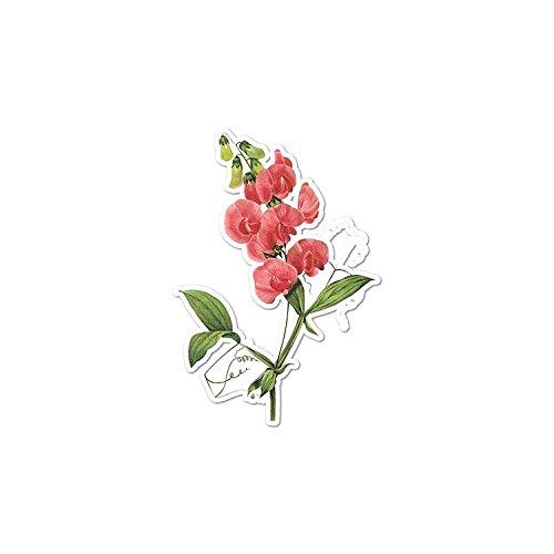 Perennial Sweet Pea - Vintage Flower Painting - Vinyl Decal Sticker - 3.75