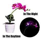Longay Men Blouse, Solar Blue Butterfly Flower Lights LED Artificial Pot Flower Bonsai LED Lamp (Purple)