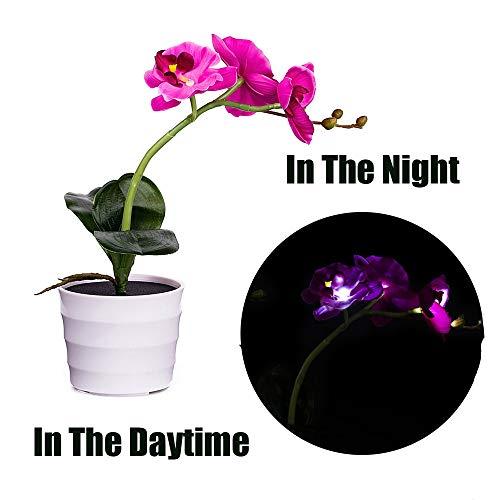 Longay Men Blouse, Solar Blue Butterfly Flower Lights LED Artificial Pot Flower Bonsai LED Lamp (Purple) ()