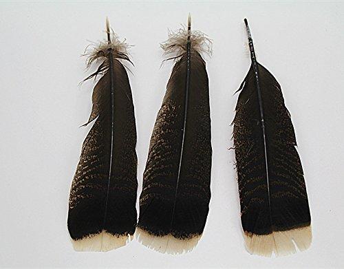 DAY10 pcs precious wild turkey tail feathers 10-12inches / - Feather Wild Turkey