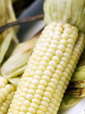 Stowell's Evergreen Sweet Corn 25 LB ~58,000 seeds by Sustainable Seed Company