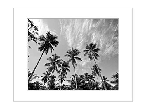 - Beach Photo Tropical Palm Tree and Sky 5x7 Matted Black and White Artwork