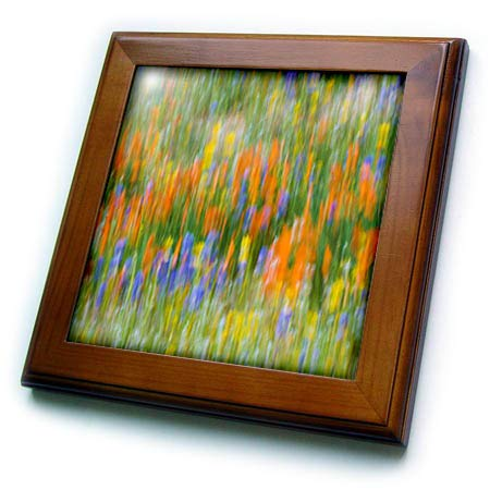 3dRose Danita Delimont - Abstracts - Wildflower Abstract, Angeles National Forest, California, USA - 8x8 Framed Tile (ft_314691_1) ()