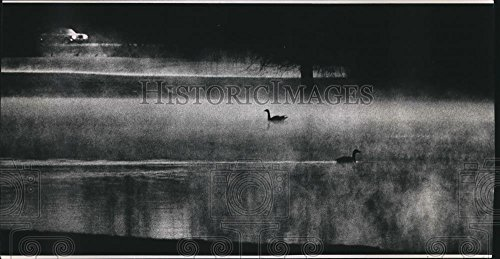 1992 Press Photo Canada Geese In The Mist On Brook Pond In Town Of Brookfield