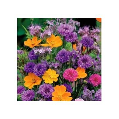 Humany flowerseeds- Rare Rattle Flower Seeds Hardy Perennial Flowers Seeds Cut Flowers Blue Rattle Flower for Balcony/Garden : Garden & Outdoor
