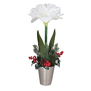 GALLERIE II Holiday Amaryllis in Pot Green 9