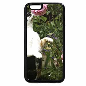 iPhone 6S Plus Case, iPhone 6 Plus Case, A cat standing on his hind legs