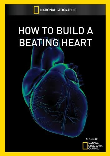 Build Beating Heart Artist Provided