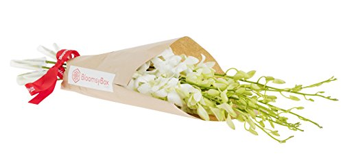 White Dendrobium Orchids (10 stems) Hand-tied Bouquet- No Vase